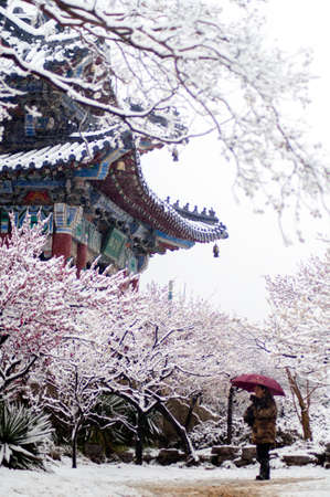 outskirts: snow days, filming on the eastern outskirts of Nanjing Meihua Mountain