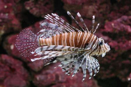 exotic fish: Peces ex�ticos
