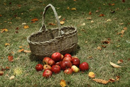 basket of apples on the grass in the garden Stock Photo - 5469628