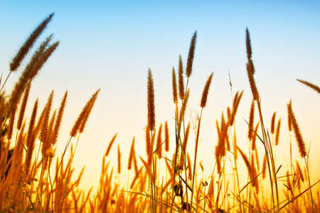 grass in wind  photo