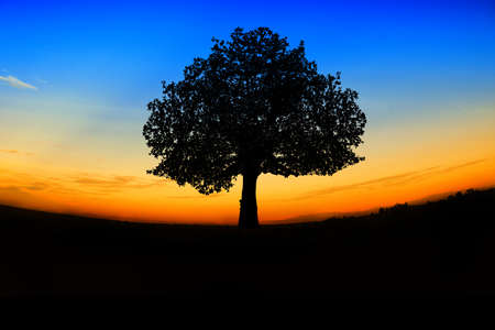 trees silhouette at sunset Stock Photo - 12358817