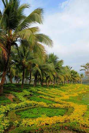 elysium: tropical garden