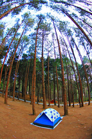 settled: Camping tent  in the forest