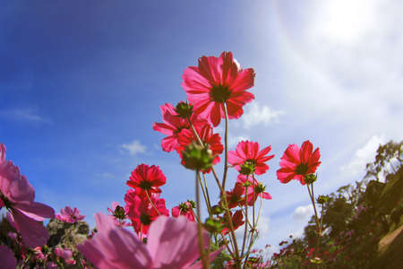pastel colors: flowers background. Stock Photo