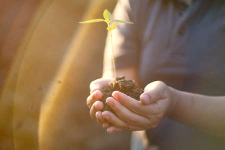 hand holding green plant growing . nature background Stock Photo