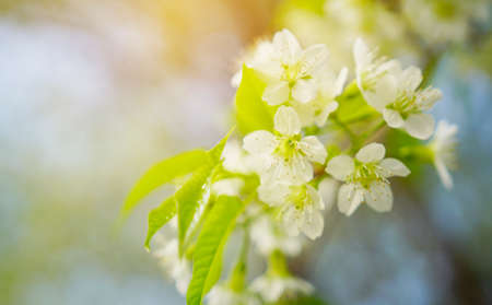 textured backgrounds: Spring flowers background.                                 Stock Photo