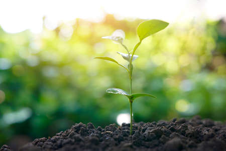 plant nature: Green plant growing with sunlight. nature background
