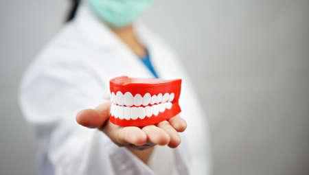 female dentist holding a denture. Dentistry conceptual