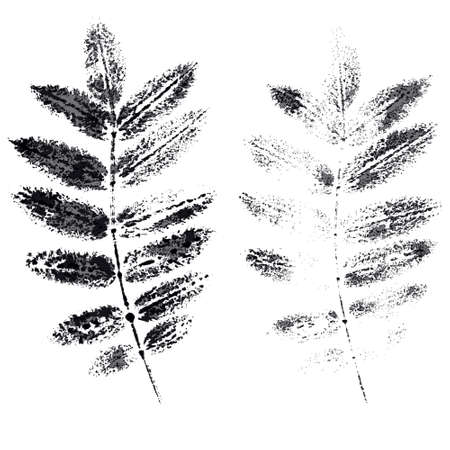 mountain ash: the leaves of mountain ash imprint global color