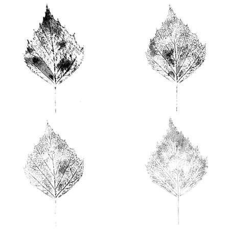 birch leaf stamp global color