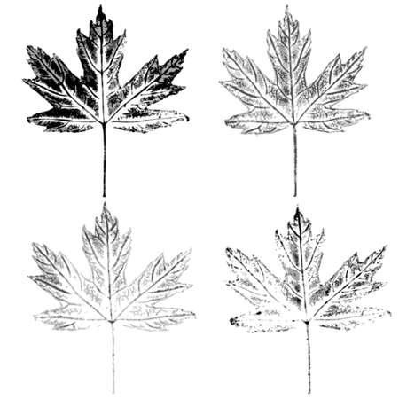 maple leaves imprint global color Illustration
