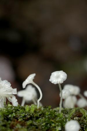 Wild Fungi at Asmat, Papua, Indonesia. Stock Photo