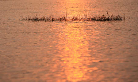 contortion: Silhouette of grass on beautiful water reflection.