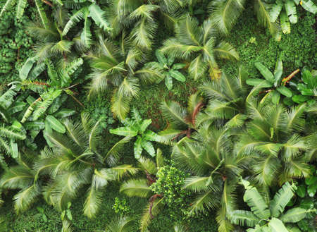 big top: Top view of tropical forest. Stock Photo