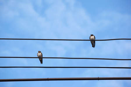 Two swiftlets on main wire under blue sky. photo