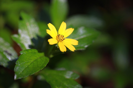 Small vibrant yellow flower Stock Photo