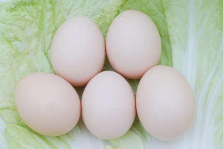 Egg and cabbage Zdjęcie Seryjne