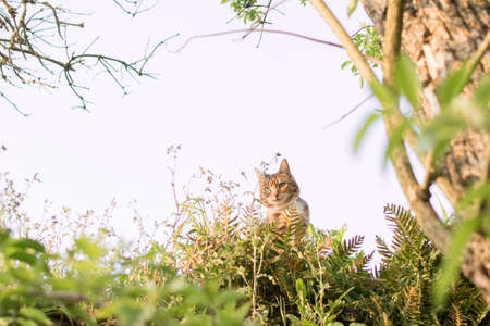 the cat is hiding, only the head and ears can be seen in the natural background, ginger cat