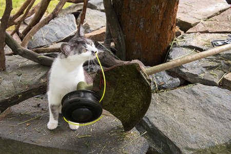 black and white cat playing with a string trimmer, safety during work