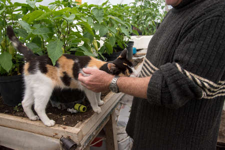 spotted cat is on wooden in greenhouse getting stroked by pet owner's hand with various plants in the background, close up