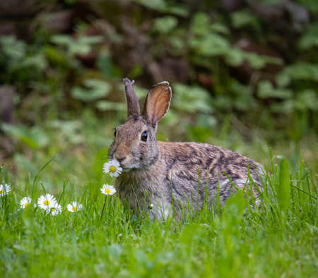 Rabbit eating flower in his habitat natural