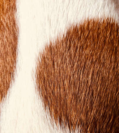 background texture spotted brown and white animal fur