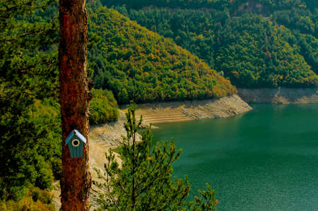 Birdhouse on a tree in the forest in front of a lake in a sunny day Stock Photo