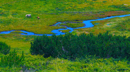 wetland with a river curling and horses