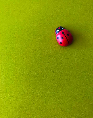 Ladybird spring fresh luck concept isolated on green background in vivid colors