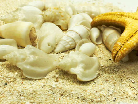 ocean sea shellfish and starfish closeup on sand texture detail summer season travel beach concept