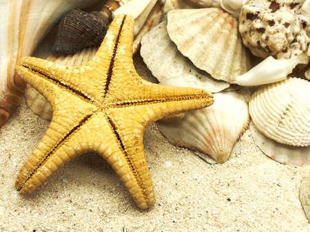 starfish ocean shells closeup on sand summer season sunny closeup concept  background