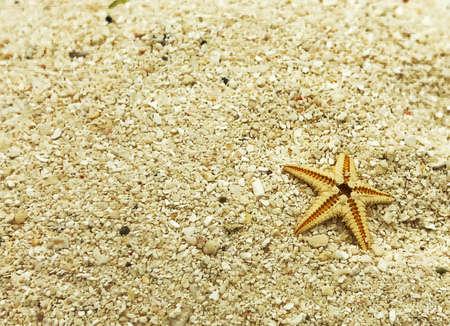 tiny starfish on sand closeup shot summer concept