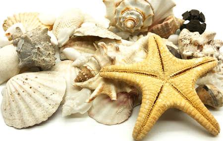 seashell starfish shell summer season closeup concept