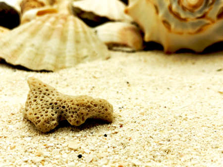 coral closeup on sand summer beach season sunny closeup concept with shell background