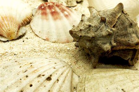 ocean sea shellfish and shells closeup on sand texture detail summer season travel beach concept
