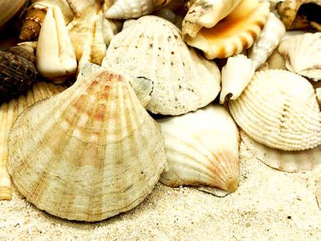 seashell starfish shell summer season closeup concept on sand Stock Photo