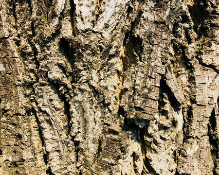 Wooden texture old aged tree cracked bumpy bark background Stock Photo