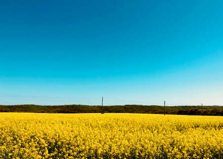 rapeseed field in a bright suny day on a mountain background with old electricity rural structure