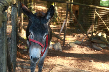Close-up view of Donkey in the fence