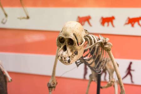 skeleton reconstruction of stone age
