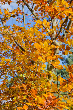 horizontal image with detail of branches with many yellow colored leaves photographed in the autumn month Banco de Imagens