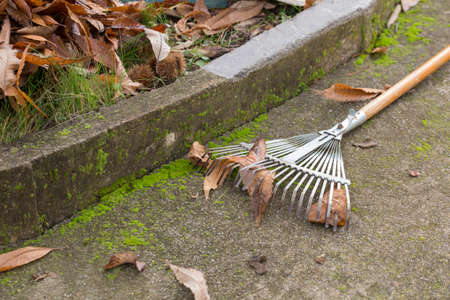 horizontal image with detail of garden tools to collect dry leaves Banco de Imagens