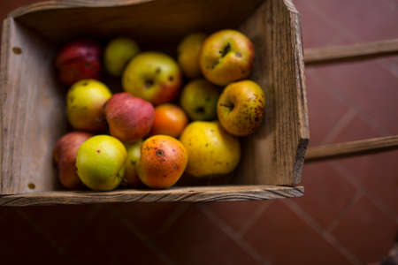 horizontal image with detail of a small wooden wheelbarrow full of freshly picked apples