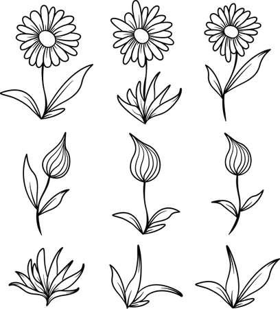 Line art illustrations of open and closed flowers and leaves.