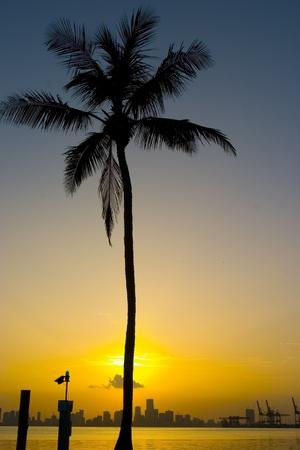 miami south beach: Sunset on Miami Skyline