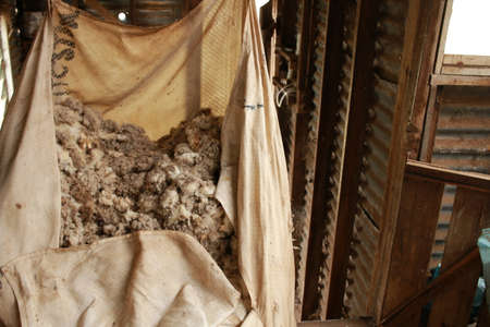 large wool bale bag being filled with freshly shorn wool on a family farm old wooden shearing shed, rural Victoria, Australia