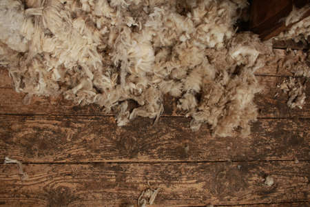 piles of freshly shorn wool scattered on the timber floor of the family farm woolshed shearing shed, rural Victoria, Australia