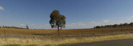 panoramic view of dry, dusty, drought stricken barren farmland with a single lone tree in the field, rural New South Wales, Australia