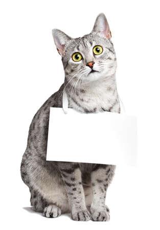 그녀의 목에 기호가있는 귀여운 이집트 Mau 고양이