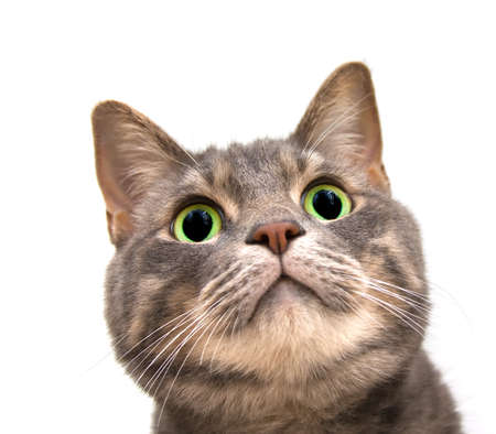 wide eyed: Wide eyed overweight cat looking up Stock Photo